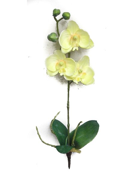 Orchids Floral Arrangement by Admired by Nature