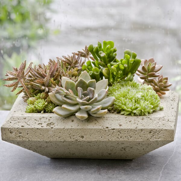 Nyssa Cast Stone Pot Planter by Campania International