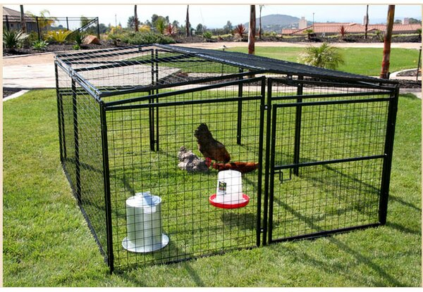 Francesca Welded Wire Dog Pen/Chicken Coop by Archie & Oscar