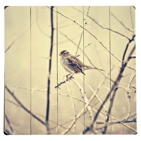 Single Bird Photographic Print Multi-Piece Image on Wood by Artehouse LLC