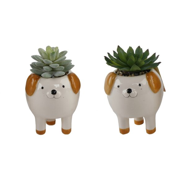 2 Piece Dog Legs Desktop Succulent Plant in Ceramic Pot Set by Ebern Designs