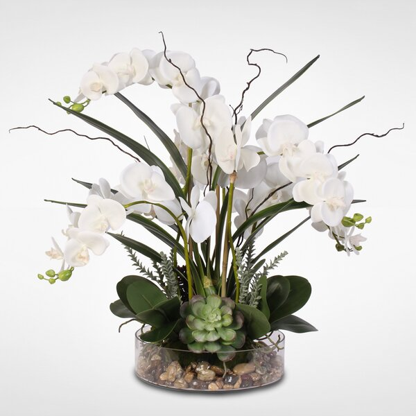 Phalaenopsis Orchid with Succulents Floral Arrangement in Pot by Red Barrel Studio