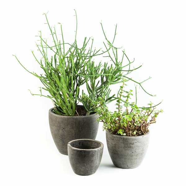 Bua 3-Piece Composite Pot Planter Set by My Spirit Garden