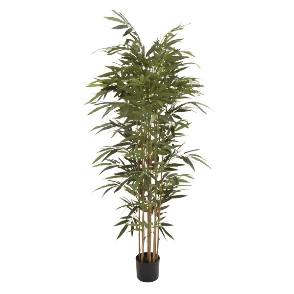 Polyethylene Potted Bamboo Tree in Planter by Cole & Grey