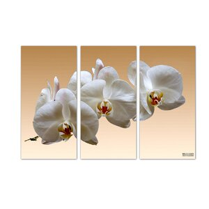 'White Orchid' by Bruce Bain 3 Piece Photographic Print on Canvas Set by Ready2hangart