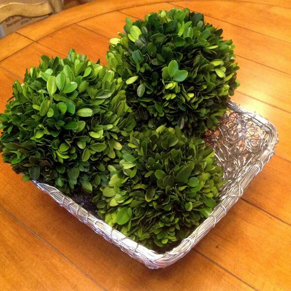 Preserved Boxwood Ball by Flora Decor