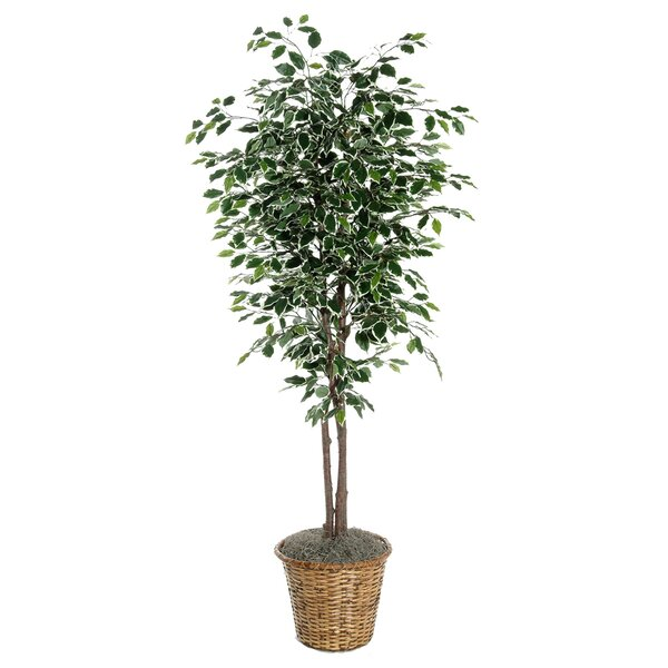 Artificial Potted Natural Ficus Tree in Basket by Three Posts