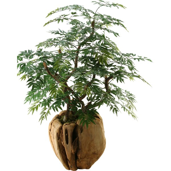 Ming Aralia Bonsai Tree in Planter by D & W Silks