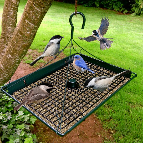Platform Tray Bird Feeder by Zenport