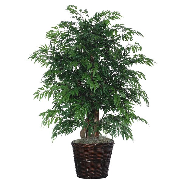 Artificial Potted Natural Ming Aralia Tree in Pot by Beachcrest Home