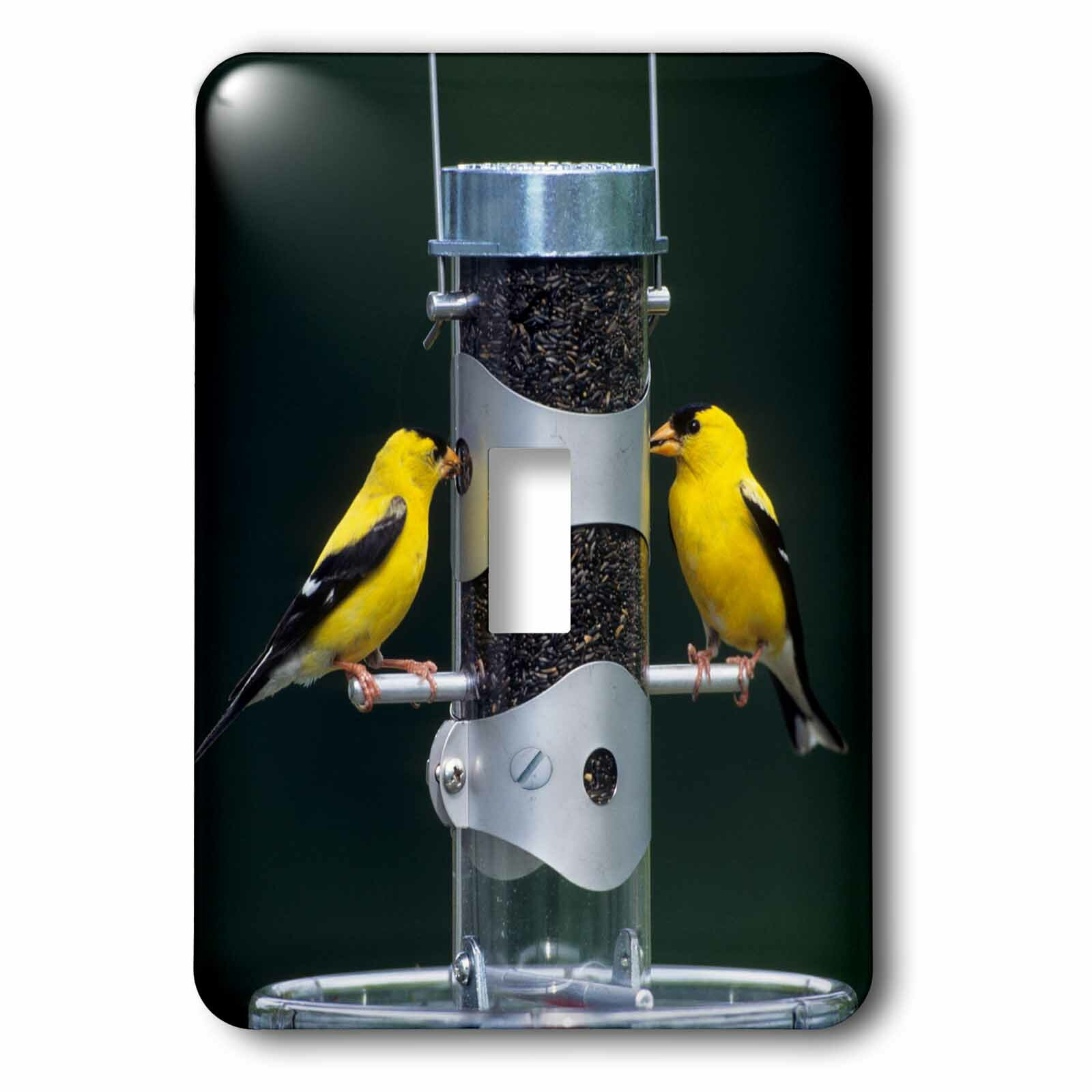 3drose American Finches Males 1 Gang Toggle Light Switch Wall Plate Wayfair