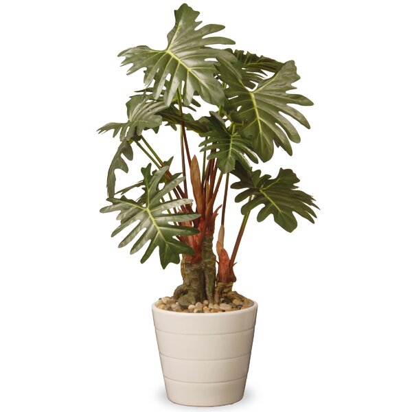 Philodendron Floor Foliage Plant in Pot by Beachcrest Home