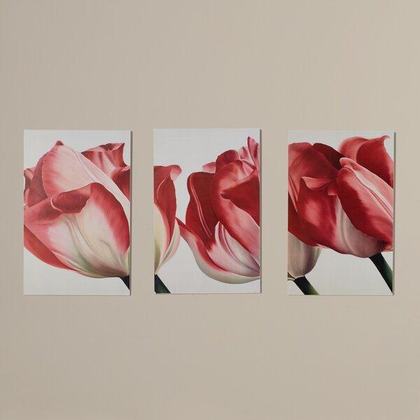 Robelmont Fresh Tulips Triptych 3 Piece Photographic Print Set by House of Hampton