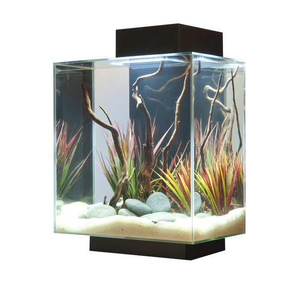 Hank 12 Gallon Edge Aquarium Kit by Archie & Oscar