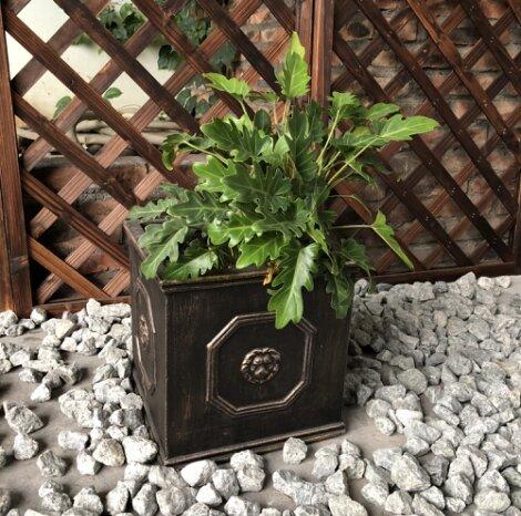 Hamza Unique Lion Head Square Concrete Pot Planter by Astoria Grand