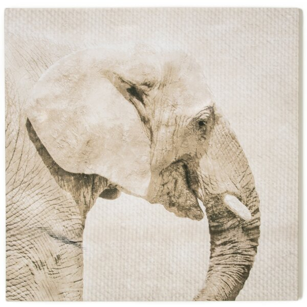 Spring 2015 Trunk Photographic Print on Wrapped Canvas by Graham & Brown