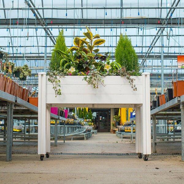 Sunseeker 4 ft x 2 ft Plastic Raised Garden by Vita Gardens