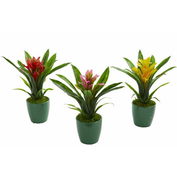 3 Piece Bromeliad Flowering Desktop Plant in Planter Set by Bay Isle Home