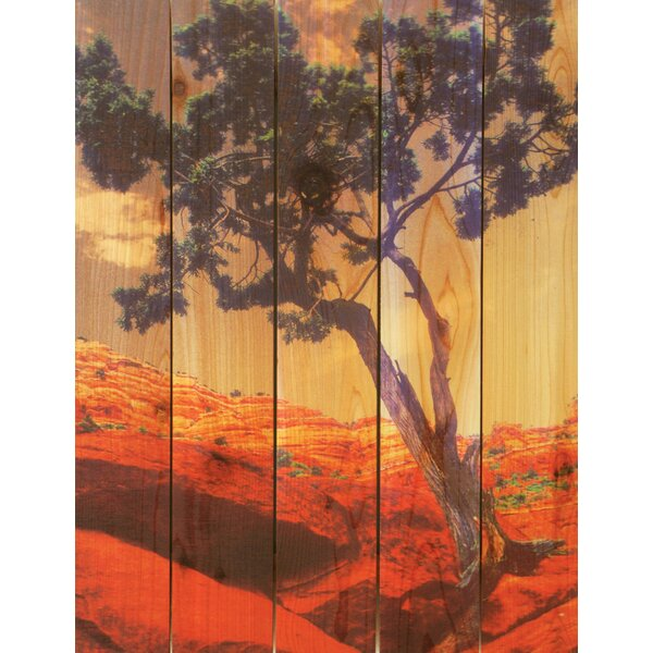 Desert Tree Photographic Print by Gizaun Art