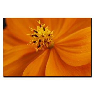 Orange Flower by Kurt Shaffer Photographic Print on Canvas by Trademark Fine Art