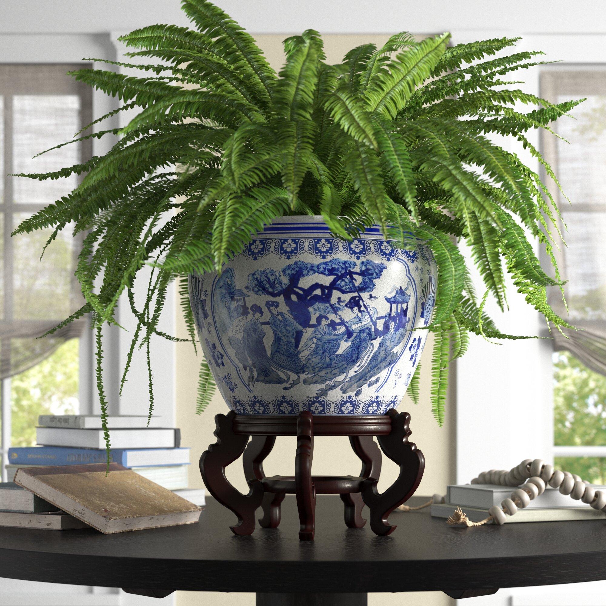 Frizzell Chinese Porcelain Pot Planter Reviews Birch Lane