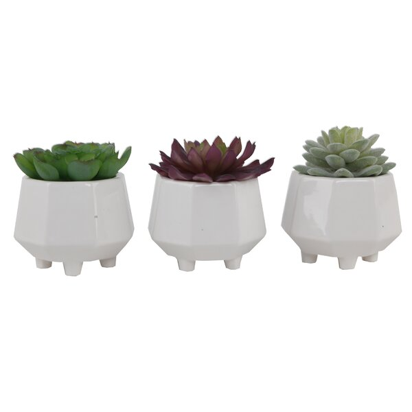 3 Piece Succulent Desktop Plant in Pot Set by Ebern Designs