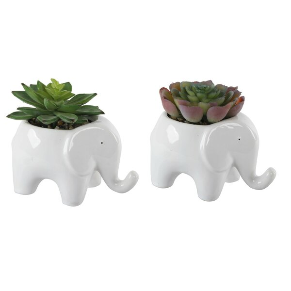 2 Piece Elephant Succulent Desktop Plant in Pot Se