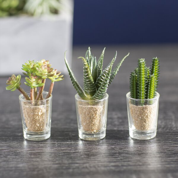Desktop Cactus Plant in Decorative Vase (Set of 3) by Mercury Row