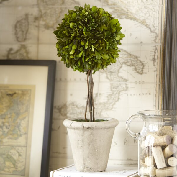 Single Ball Preserved Boxwood Topiary by Birch Lane™