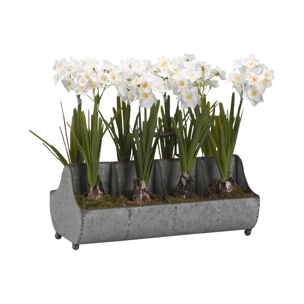 Paperwhite Floral Arrangement in Rectangle Metal Planter by Ophelia & Co.