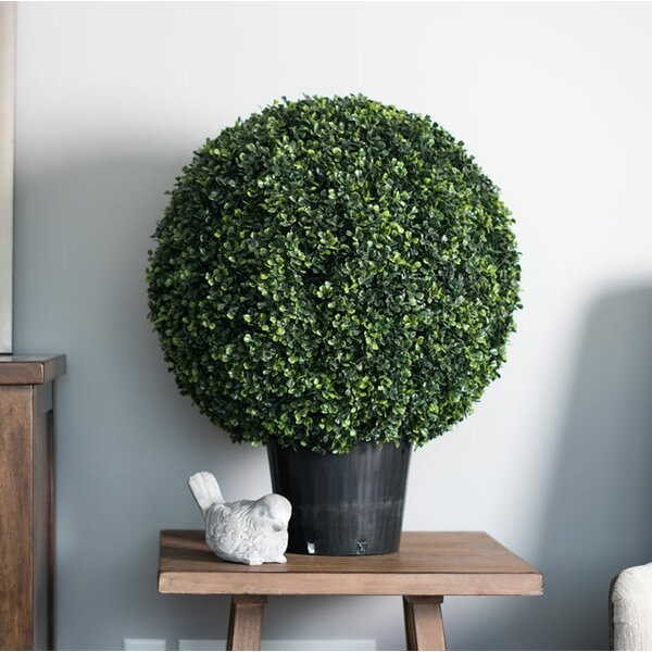Ball Boxwood Topiary In Pot by Three Posts