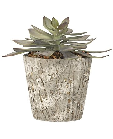 Frosted Echeveria Floor Succulent Plant in Pot by Wrought Studio