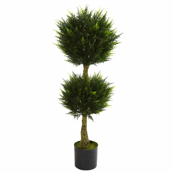 Double Ball Cypress Round Topiary in Pot by Darby Home Co