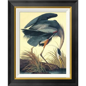 'Great Blue Heron' by John James Audubon Framed Painting Print by Global Gallery