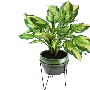 Modern & Contemporary Modern Indoor Floor Plants | AllModern