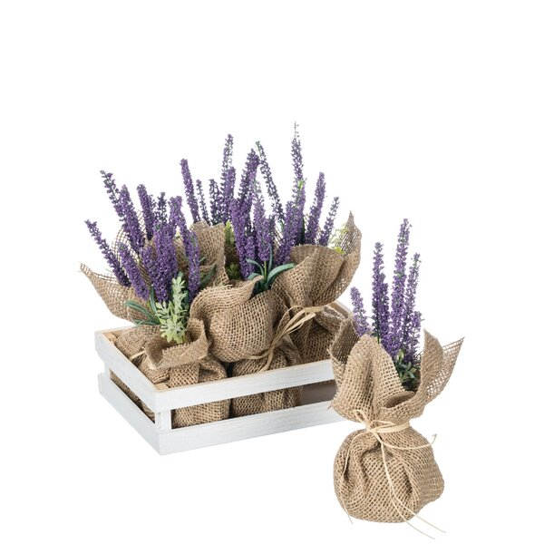 6 Piece Potted Lavender Desktop Flower in Tray Set by Gracie Oaks