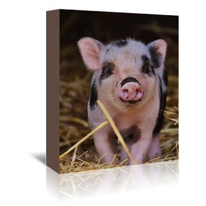 'Farm Animal Pig' Photographic Print on Wrapped Canvas by East Urban Home