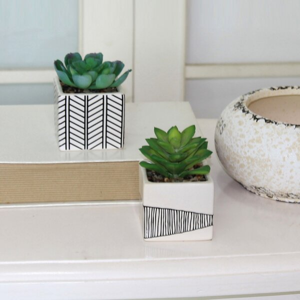 2 Piece Succulent Desktop Plant in Pot Set by Wrought Studio