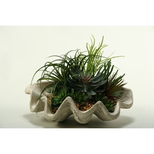 Pearl Grass, Assorted Echeveria, Aloe and Succulents Desk Top Plant in Decorative Vase by Bay Isle Home