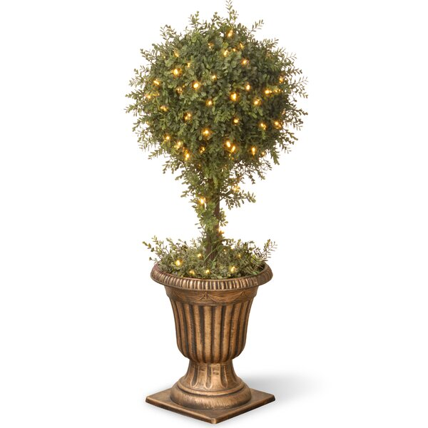 Floor Boxwood Topiary in Urn by National Tree Co.