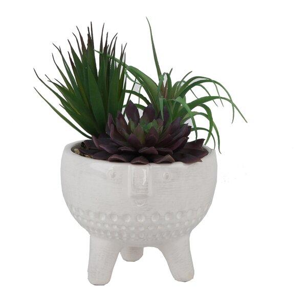 Desktop Succulent Plant in Decorative Vase by Bungalow Rose