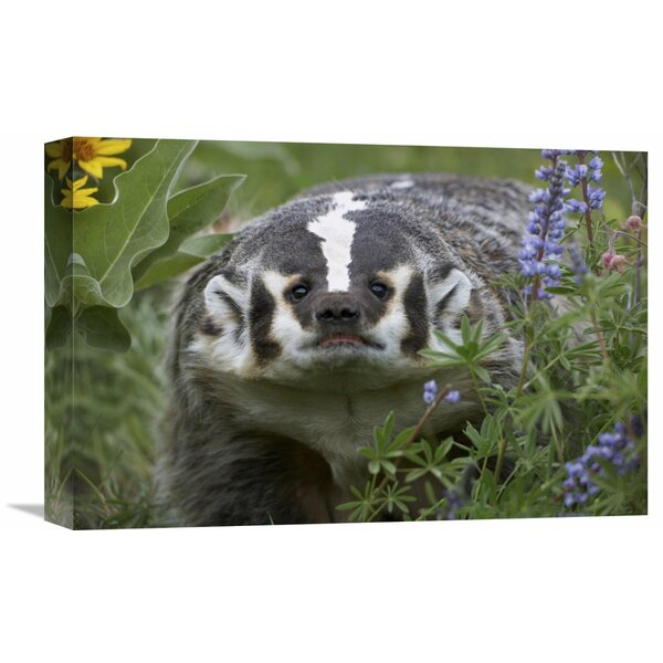 Nature Photographs American Badger Amid Lupine, North America by Tim Fitzharris Photographic Print on Canvas by Global Gallery
