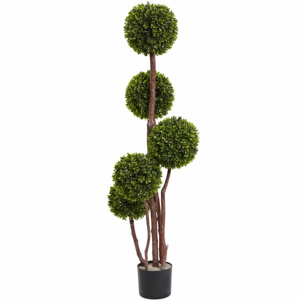 Boxwood Topiary in Pot by Three Posts