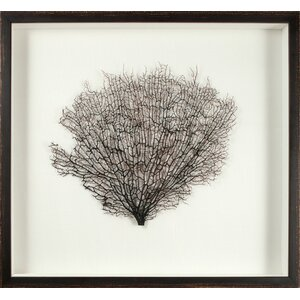 Large Natural Sea Fan Framed Graphic Art by Mirror Image Home