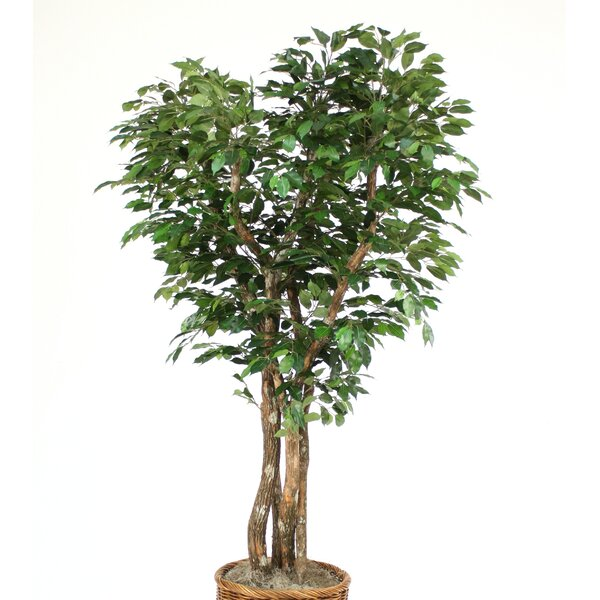 Canopy Ficus Tree in Planter by Distinctive Designs