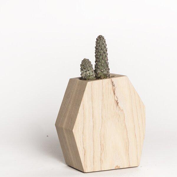 René Succulent Wood Pot Planter by Boyce Studio