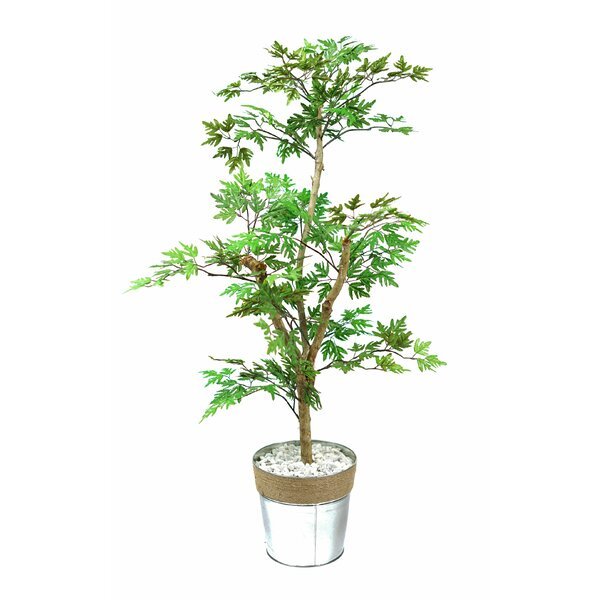Mini Ming Aralia Floor Foliage Tree in Pot by Breakwater Bay