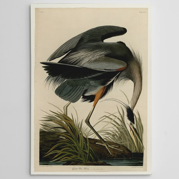 Great Blue Heron by John James Audubon Painting Print on Wrapped Canvas by Wexford Home