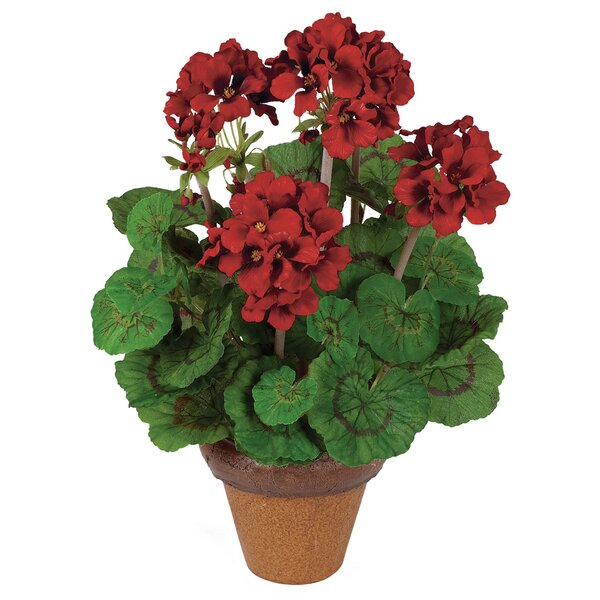 Geranium Centerpiece in Pot by August Grove