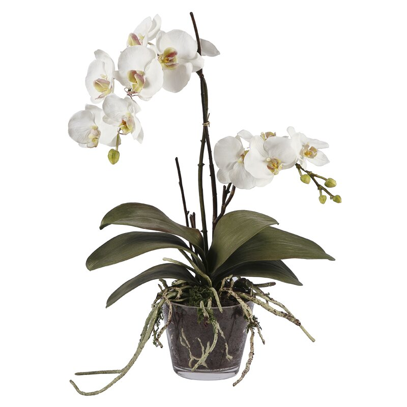 Jane Seymour Botanicals Phalaenopsis Orchid Flower In Decorative